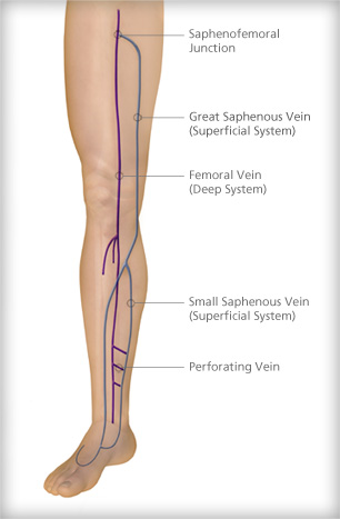 Venous Anatomy